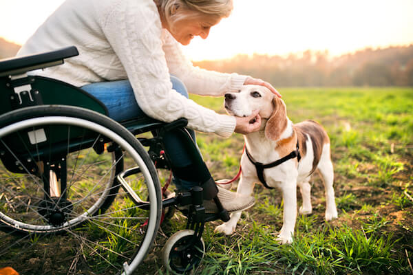 Woman in wheelchair with dog